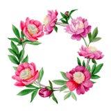 Peonia rosa Fiore botanico floreale Struttura selvaggia del wildflower della foglia di estate illustrazione di stock