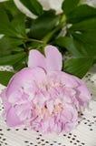 Peonia rosa sulla tavola Immagini Stock