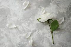 Peonia su un fondo di marmo, fotografato di giorno Fotografie Stock Libere da Diritti