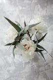 Peonia su un fondo di marmo, fotografato di giorno Fotografie Stock