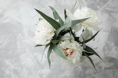 Peonia su un fondo di marmo, fotografato di giorno Immagine Stock Libera da Diritti