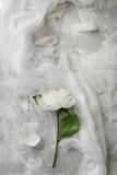 Peonia su un fondo di marmo, fotografato di giorno Fotografia Stock