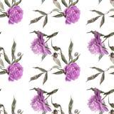 Peonia viola molle Fotografia Stock Libera da Diritti
