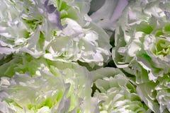 Peonia zamknięta jako naturalny tło, różni kolory, jako naturalny tło tekstura lub fotografia royalty free