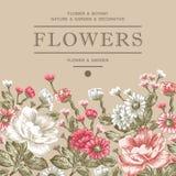 Peonie, chamomile, Wildflowers rama Zdjęcia Stock