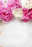 Peonie rosa sbalorditive, garofani gialli e rose immagine stock libera da diritti