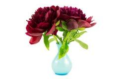 Peonie in vase Stock Photos