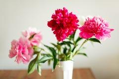 peonie Wildflowers w szkle Zdjęcia Stock