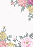 Peonies και τριαντάφυλλα γάμος απεικόνισης καρτών αφαίρεσης Στοκ φωτογραφίες με δικαίωμα ελεύθερης χρήσης