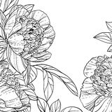 Peonies black line art background Royalty Free Stock Photos