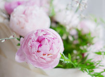 Peonies bouquet Royalty Free Stock Images