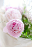 Peonies bouquet Royalty Free Stock Photo