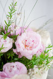 Peonies bouquet Stock Photos