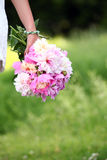 Peonies bouquet in woman's hand outdoors Stock Photos