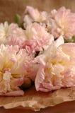 Peonies cor-de-rosa Imagens de Stock Royalty Free