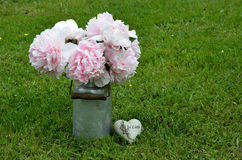 Peonies cor-de-rosa no jardim fotografia de stock royalty free
