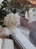 Peonies and diary by the window. stock images