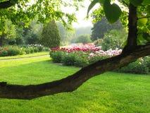 Peonies en el parque Foto de archivo libre de regalías