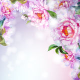 Peonies flowers background. Royalty Free Stock Photography