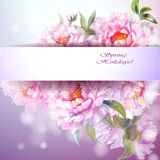 Peonies flowers background. Stock Photography