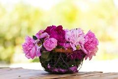 Peonies flowers Stock Photos