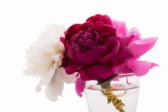 Peonies flowers Royalty Free Stock Photos
