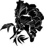 Peonies. Flowers peonies. Set of four vector silhouettes of hand. Drawn peony flowers isolated on white background Stock Photography