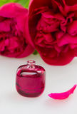 Peonies fragrance Stock Photography