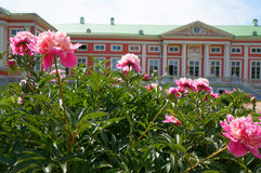 Peonies front of the palace (Kuskovo Estate near Moscow) Royalty Free Stock Photos