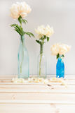 Peonies in Glass Bottles. Three Peonies each in a Glass Bottle on White Background with Space for Text Stock Image