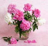 Peonies hermosos en un florero de cristal Fotografía de archivo libre de regalías