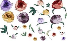 Peonies hermosos Flores en color Elementos del dise?o Sistema de la peonía y de la hoja fotos de archivo