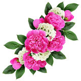 Peonies and hydrangea flowers bouquet Royalty Free Stock Image