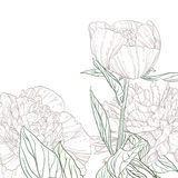 Peonies line art Stock Photos