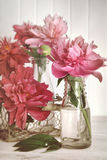 Peonies in milk bottles Stock Image