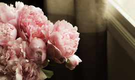 Peonies by morning window light Stock Image