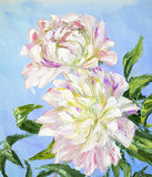 Peonies, oil painting Stock Images