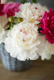 Peonies in old vase Stock Images