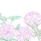 Peonies pink line art background Stock Photo