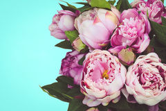 Peonies on plain cyan  background Royalty Free Stock Photography