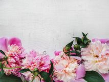 Peonies, space for your inscriptions on a white background stock photo