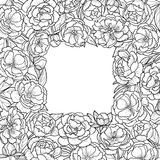 Peonies Squared Frame Stock Images