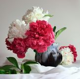 Peonies still life royalty free stock images