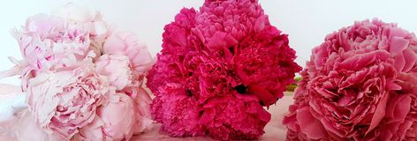 Peonies. Three  different peonies on  the table Stock Image