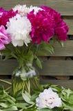 Peonies three-liter jar Royalty Free Stock Photography