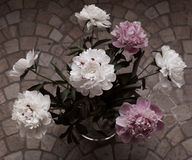 Peonies in the vase Royalty Free Stock Photography