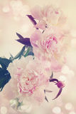 Peonies in a vase old photo Royalty Free Stock Image
