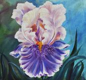 Peonies in a vase, original oil painting on canvas. Painting with a beautiful flower of iris close-up, against the background of green leaves. Illustration of stock illustration