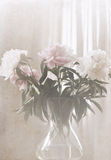 Peonies in the vase, soft blur Stock Photos