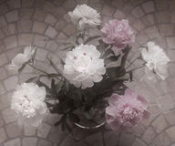 peonies in the vase,  soft blur Royalty Free Stock Images